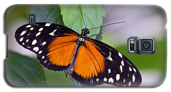 Orange And Black Butterfly Galaxy S5 Case
