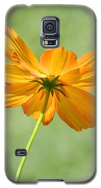 Orange And Green Galaxy S5 Case