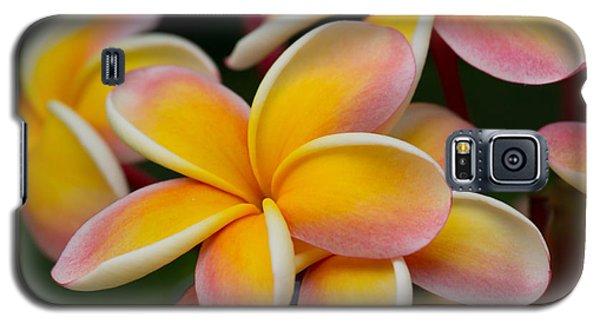 Orange And Pink Plumeria Galaxy S5 Case