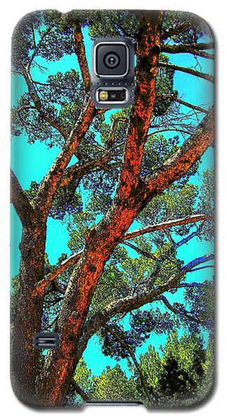 Galaxy S5 Case featuring the photograph Orange And Turquoise  by Jodie Marie Anne Richardson Traugott          aka jm-ART