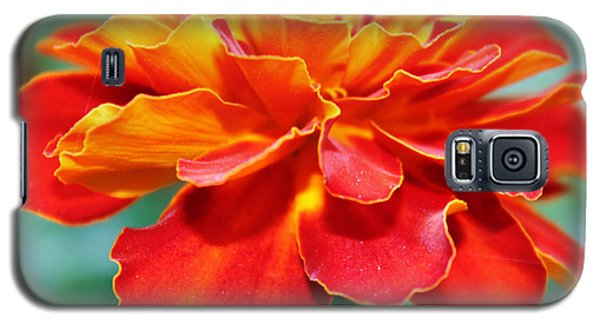 Orange And Yellow Marigold Galaxy S5 Case
