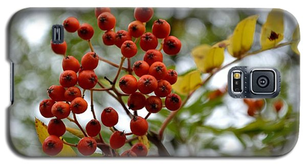 Galaxy S5 Case featuring the photograph Orange Autumn Berries by Scott Lyons
