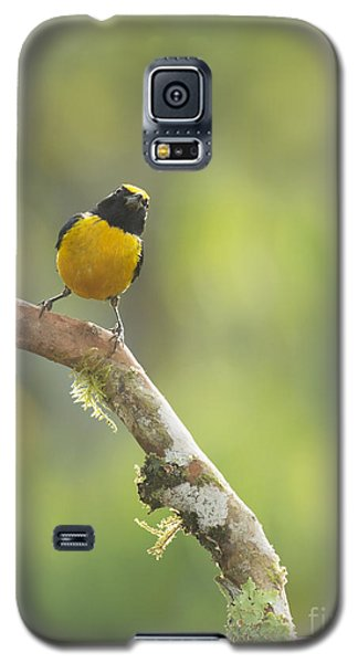 Orange-bellied Euphonia Galaxy S5 Case