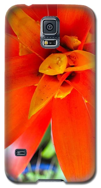 Orange Bromeliad Galaxy S5 Case by Lehua Pekelo-Stearns