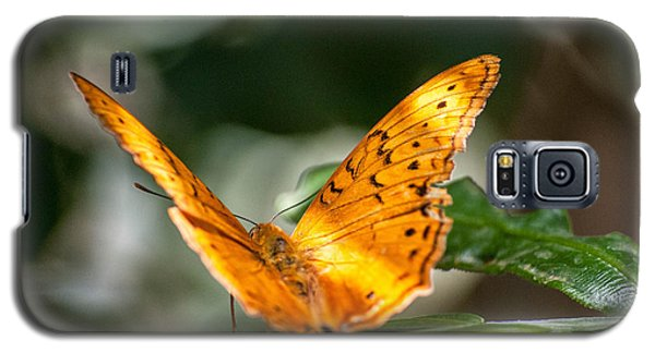 Orange Butterfly Galaxy S5 Case