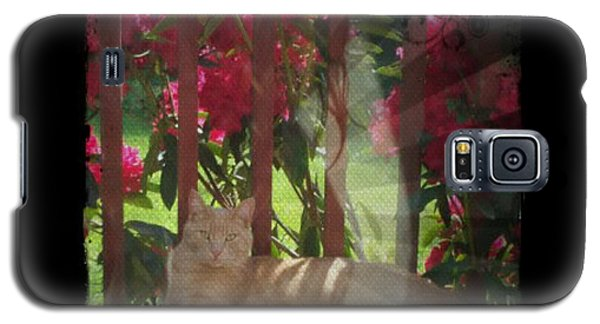 Galaxy S5 Case featuring the photograph Orange Cat In The Shade by Absinthe Art By Michelle LeAnn Scott