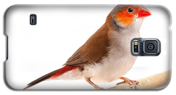 Galaxy S5 Case featuring the photograph Orange-cheeked Waxbill Estrilda Melpoda by David Kenny