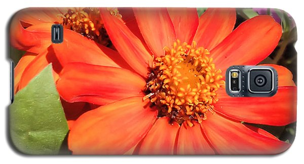 Galaxy S5 Case featuring the photograph Orange Daisy In Summer by Luther Fine Art