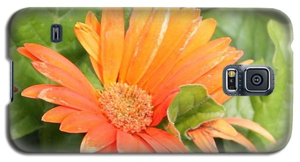 Orange Daisy  Galaxy S5 Case