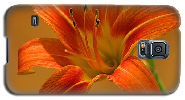 Galaxy S5 Case featuring the photograph Orange Daylily by Olivia Hardwicke