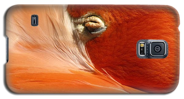 Flamingo Orange Eye Galaxy S5 Case