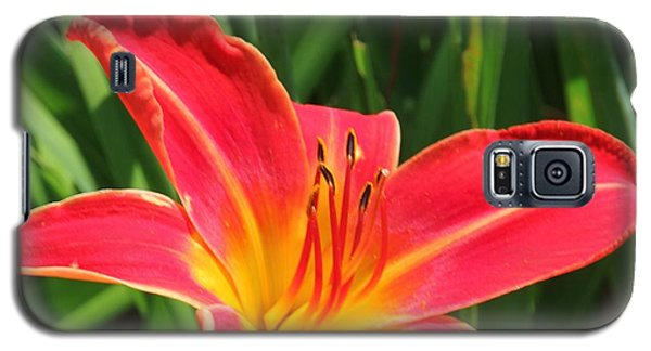 Orange Flower Galaxy S5 Case by Bill Woodstock
