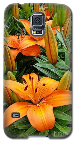 Galaxy S5 Case featuring the photograph Orange Flowers by Rose Wang