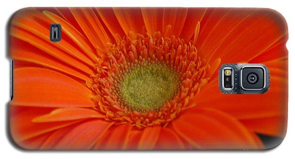 Orange Gerber Daisy Galaxy S5 Case