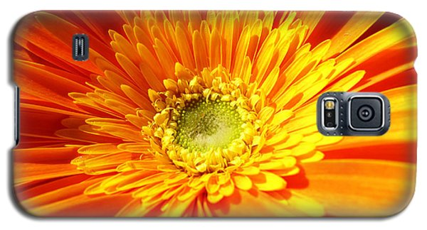Orange Gerbera Galaxy S5 Case