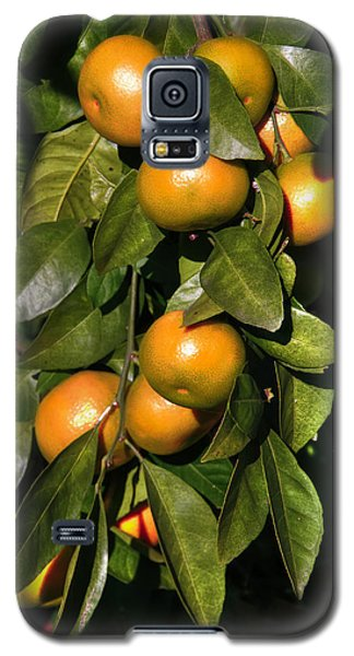 Orange Galaxy S5 Case by Gouzel -