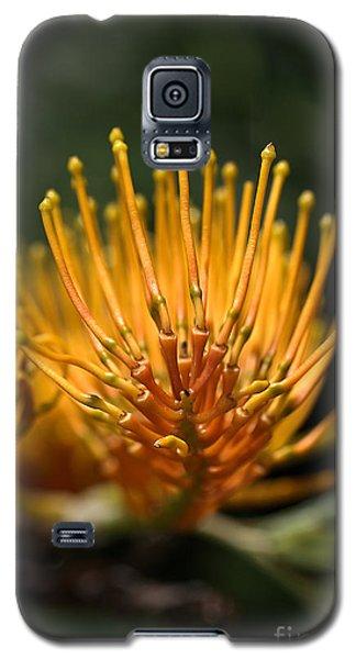Orange Grevillea Galaxy S5 Case