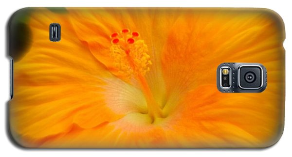 Galaxy S5 Case featuring the photograph Orange Hibiscus Flower by Clare Bevan