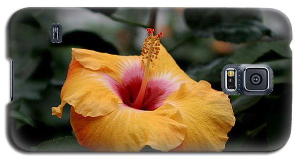 Orange Hibiscus Galaxy S5 Case by Living Color Photography Lorraine Lynch