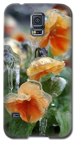 Orange Iced Pansies Galaxy S5 Case