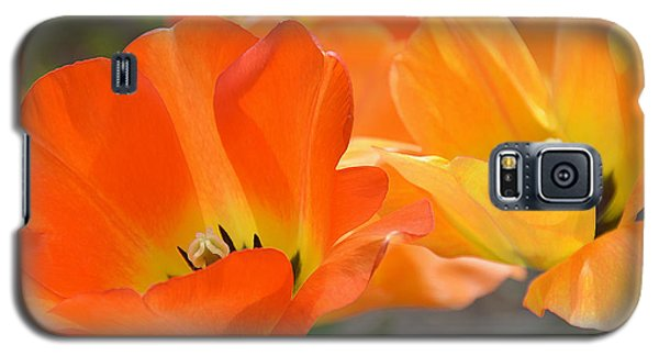 Galaxy S5 Case featuring the photograph Two Tulips by JoAnn Lense