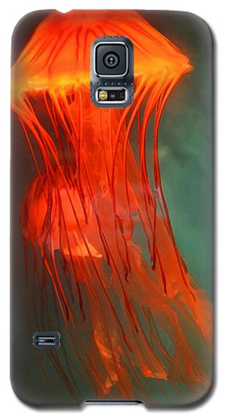 Orange Jellies Galaxy S5 Case