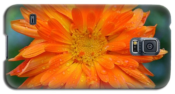Galaxy S5 Case featuring the photograph Orange Juice by Debra Kaye McKrill