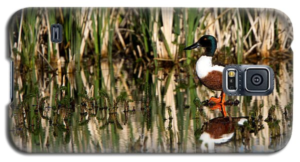 Northern Shoveler Orange Legs Galaxy S5 Case