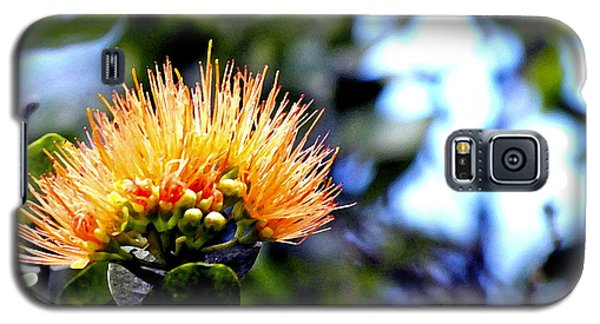 Galaxy S5 Case featuring the photograph Orange Lehua On Volcano Ranch by Lehua Pekelo-Stearns
