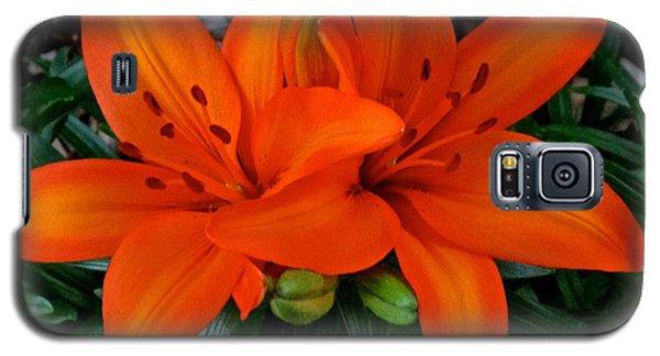 Orange Lilies Galaxy S5 Case