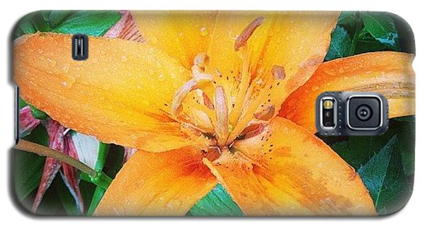 Orange Galaxy S5 Case - #orange #lily After The #rain Is Still by Teresa Mucha