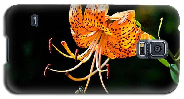 Orange Lily - Lilium Kelleyanum Galaxy S5 Case