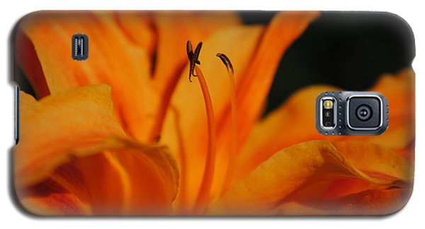 Orange Lily Galaxy S5 Case