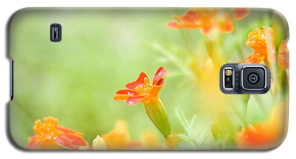 Galaxy S5 Case featuring the photograph Orange Meadow by Ann Lauwers