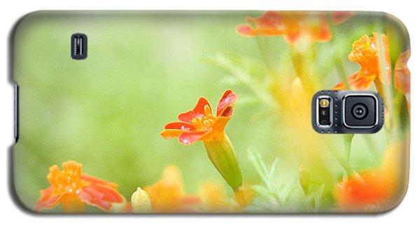 Orange Meadow Galaxy S5 Case by Ann Lauwers