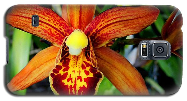 Galaxy S5 Case featuring the photograph Orange Orchid by Kristine Merc