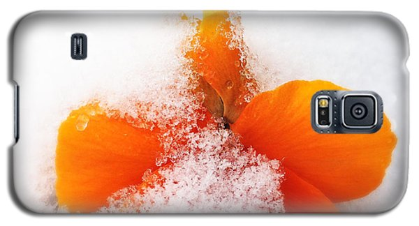 Orange Galaxy S5 Case - Orange Pansy Flower Covered With White Snow In Spring by Matthias Hauser