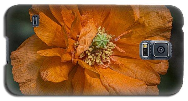 Orange Pop Galaxy S5 Case
