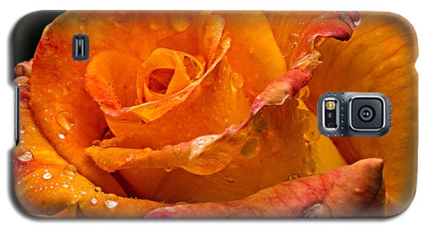 Orange Rose Drops Galaxy S5 Case