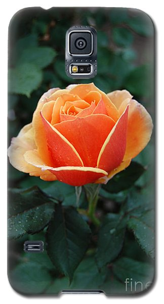 Galaxy S5 Case featuring the photograph Orange Rose by Eva Kaufman