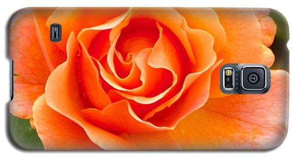 Galaxy S5 Case featuring the photograph Orange Rose Lillian by Dee Dee  Whittle
