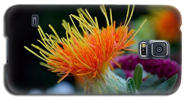 Orange Safflower Galaxy S5 Case