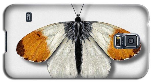 Orange Tip Butterfly - Anthocharis Cardamines Naturalistic Painting - Nettersheim Eifel Galaxy S5 Case
