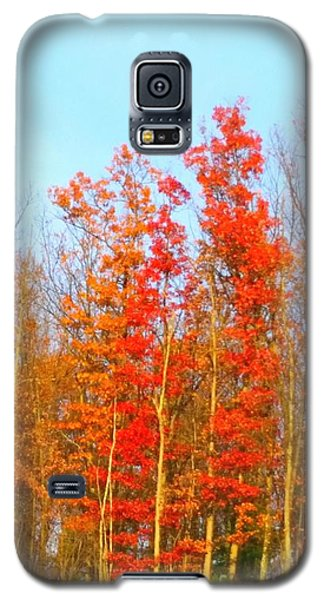Orange Trees.  Galaxy S5 Case