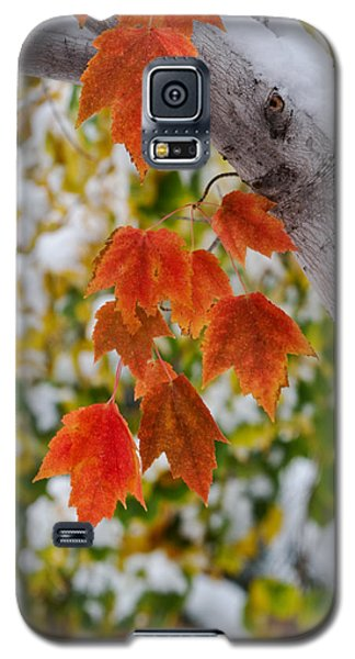 Galaxy S5 Case featuring the photograph Orange White And Green by Ronda Kimbrow