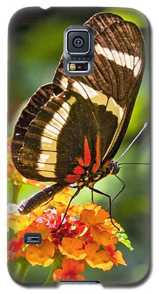 Oranges Attract Galaxy S5 Case by Karen Stephenson