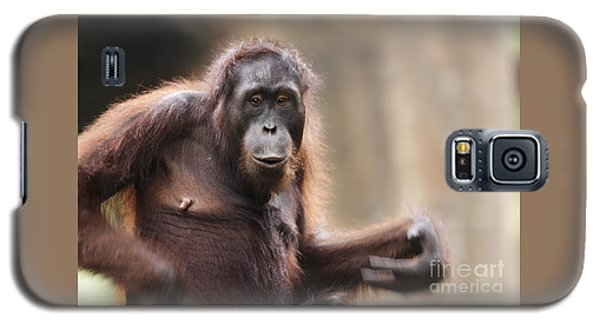 Orangutan Galaxy S5 Case by Richard Garvey-Williams