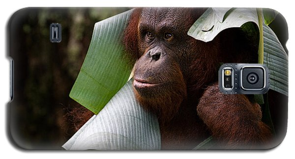 Galaxy S5 Case featuring the photograph Orangutan by Zoe Ferrie