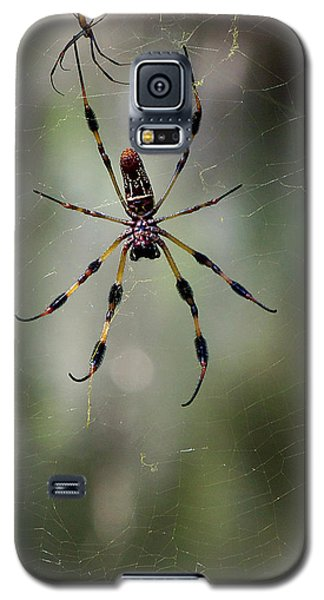 Galaxy S5 Case featuring the photograph Orb Weaver 006 by Chris Mercer
