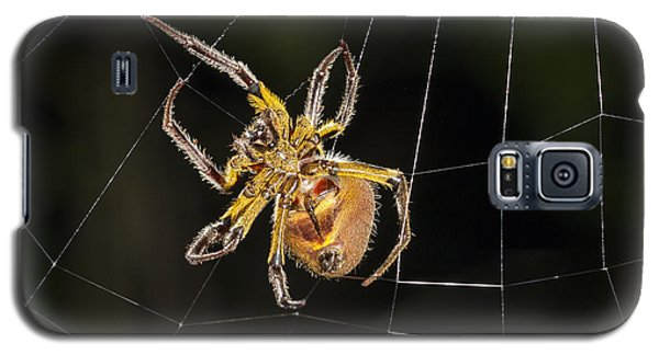 Orb-weaver Spider In Web Panguana Galaxy S5 Case by Konrad Wothe